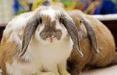 Het behouden van een Rabbit's Foot