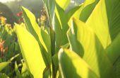 Vervanging voor bananenbladeren