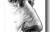 Schimmel Sinusitis symptomen