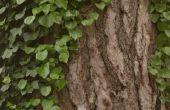 De soorten wilde Klimmen Vines