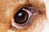 Hond ooglid tumoren