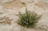Hoe om te mengen Up Killzall Herbicide concentraat