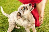 Wat Is de wet van Texas voor het aanbrengen van een agressieve hond te slapen?