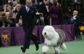 Help het benoemen van een hond voor AKC registratie