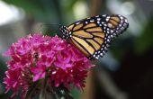 Hoe te identificeren vliegende insecten