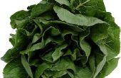Hoe blancheer en bevriezen van spinazie