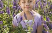 How to Grow lavendel uit een zaad