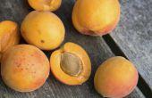 Hoe te eten van abrikozen