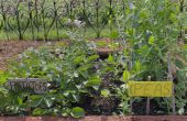 Weed Killer in plantaardige tuinen