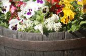 Het rangschikken van bloemen in een wijn vat Planter