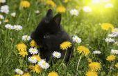 Wat bloemen aan de Plant die konijnen eten niet