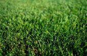 Winter gras snijden Tips