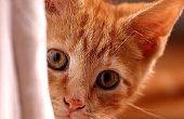Hoe weet u of uw kat ziek is