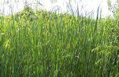 How to Get Rid van gras Stickers in een tuin in Florida
