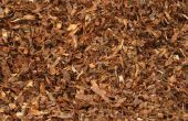 Wat Is het Winter mulchen van planten?