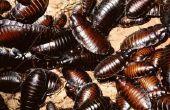 Waarom krijg kakkerlakken in uw badkamer?