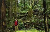 Wat zijn sommige abiotische factoren in een gematigde regenwoud?