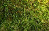 How to Kill Moss op het gazon