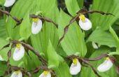 Bedreigde planten van het tropisch regenwoud