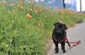How to Stop honden uit plassen op planten