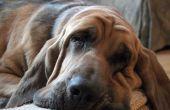 Bijwerkingen van het gebruik van Proin bij honden