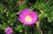 Harten en bloemen ijs Plant verzorging