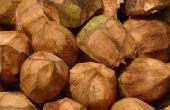 Hoe schil verse kokosnoot