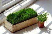 Kan tarwe gras tweemaal worden gesneden?