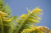 Hoe maak je een kroon uit Palm takken
