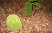 How to Grow Cactus uit stekken