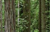 Abiotische factoren in het Redwood bos-ecosysteem