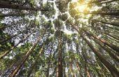 Geestelijke betekenis van de ceder boom
