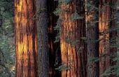 Is beter dan Redwood gevelbekleding Siding Cedar?