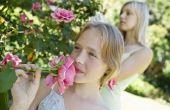Welke bloemen kan ik Plant in het vroege voorjaar?