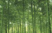 Bamboe vloeren van de Bevloering van het hardhout van de Vs
