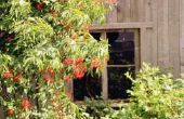Wissen van een begroeide achtertuin