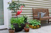 Container plantaardige tuinieren voor Beginners