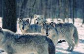 Lijst van de soorten dierlijk gedrag