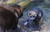 Symptomen van oorinfecties bij honden