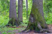 Welke kant van de boom groeit mos op?