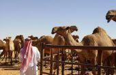 Arabian Nights partij decoratie ideeën