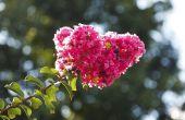 De beste planten van de Container voor een tuin in de zon