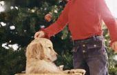 Gidsen voor kinderen op het verkrijgen van een nieuwe pup