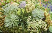 How to Make potgrond voor vetplanten