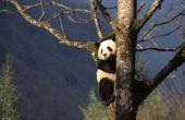 De bedreigde diersoorten van bladverliezende wouden biomen