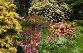Creëren van een informele Flowerbed