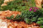 De beste bloemen aan de Plant in Texas