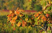 Planten & irritatie van de huid