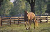 Paarden recht in Colorado