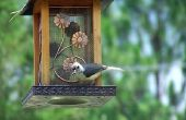 Hoe te stoppen met een hond van het eten van Wild vogel zaad